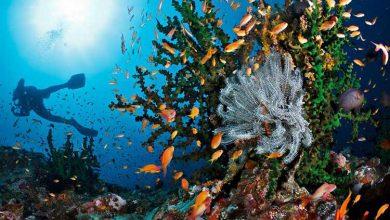 Photo of Mengenal Kawasan Konservasi Perairan  Di Indonesia