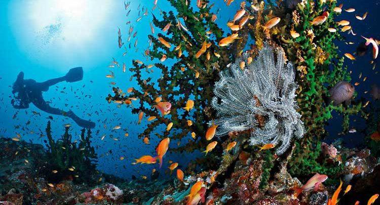 Mengenal Kawasan Konservasi Perairan  Di Indonesia 1