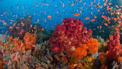 Photo of Dari Diver Teh Celup Sampai Ber-license