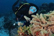 Photo of Apakah kontes Miss Scuba Sudah Ramah Gender?